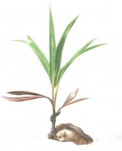 planta-242x300
